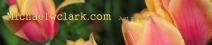 mwc-copy.jpg